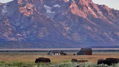 Bison party in the Kingdom. #avalon7 #adventuremore #jhlife @yogatoday www.avalon7.co