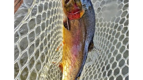 Fall is for fishing. Huge cutthroat caught on an emerger pattern in Idaho.  #avalon7 #liveactivated #flyfishing www.a-7.co