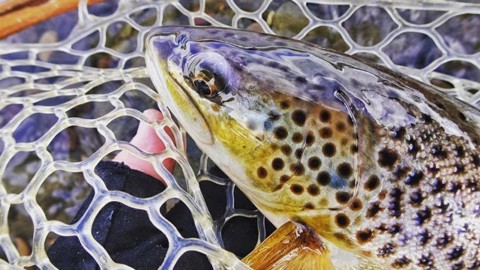 Fall beauty. @avalon7 #liveactivated #flyfishing www.a-7.co